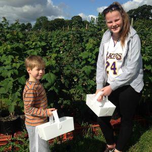 15.08.15 - Fruit Picking 2