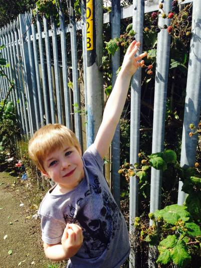 Tadpole loves picking his own blackberries